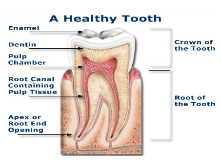 Root Canal San Antonio Dentist